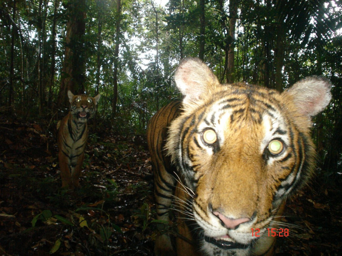 BBC Wildlife Magazine Camera-trap Photo of the Year 2010